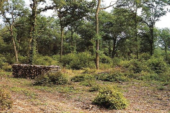Mittelwald_Seite_1_Bild_0007